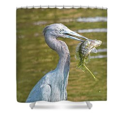Little Blue Shows Me Its Catch Shower Curtain