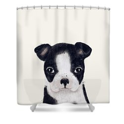 Shower Curtain featuring the painting Little Boston Terrier by Bri B