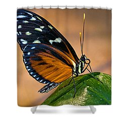 Little Butterfly Shower Curtain by Christopher Holmes