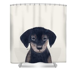 Shower Curtain featuring the painting Little Dachshund by Bri B