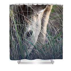 Little Doe Shower Curtain