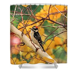 Little Downy In Autumn Shower Curtain by Donna Kennedy