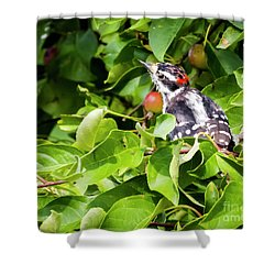 Shower Curtain featuring the photograph Little Downy Woodpecker  by Ricky L Jones