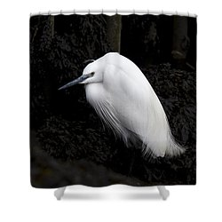 Little Egret Shower Curtain