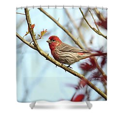 Little Finch Shower Curtain by Trina Ansel