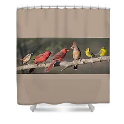 Little Flock Shower Curtain