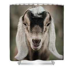 Little Goat In Color Shower Curtain by Kelly Hazel