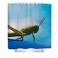 Little Grasshopper Shower Curtain by Christopher Holmes