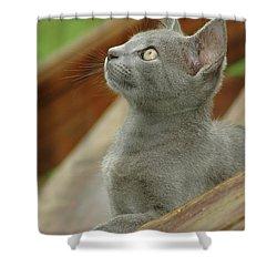Little Gray Kitty Cat Shower Curtain