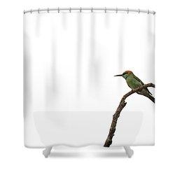 Little Green Bee Eater  Merops Orientalis  Shower Curtain