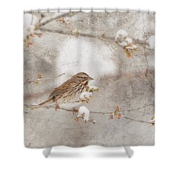 Little House Sparrow Shower Curtain
