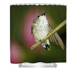 Little Humming Bird Shower Curtain