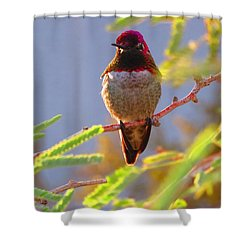 Little Jewel With Wings Fourth Version Shower Curtain