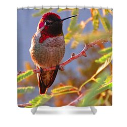 Little Jewel With Wings Second Version Shower Curtain