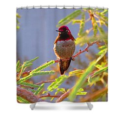 Little Jewel With Wings Third Version Shower Curtain