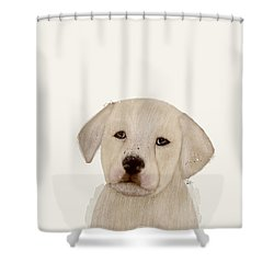 Shower Curtain featuring the painting Little Labrador by Bri B