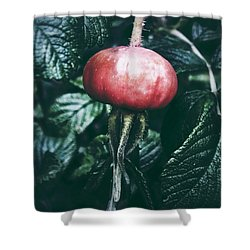 Little Lady Rosehip Shower Curtain by Karen Stahlros