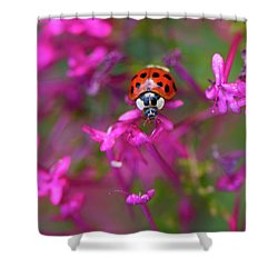 Little Lady Shower Curtain by Shelley Neff
