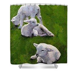 Little Lambs Shower Curtain