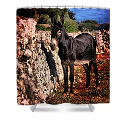 Little Mediterranean Donkey Dream Color With White Eyes And Belly  Hdr By Pedro Cardona Shower Curtain by Pedro Cardona Llambias