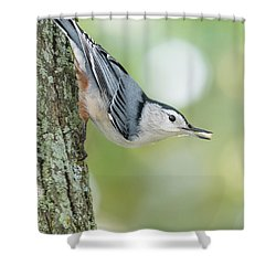 Little Nutty Bokeh Shower Curtain