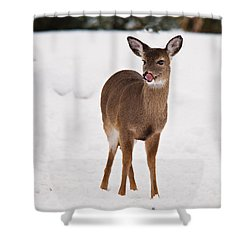 Shower Curtain featuring the photograph Little One by Angel Cher