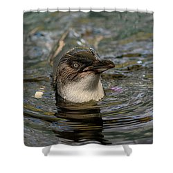 Little Penguin In The Water Shower Curtain