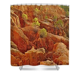 Little Pine Trees Growing On The Valley Cliffs Shower Curtain