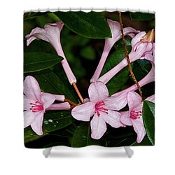 Little Pinks Shower Curtain by Christopher Holmes