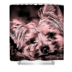 Shower Curtain featuring the photograph Little Powder Puff by Kathy Tarochione
