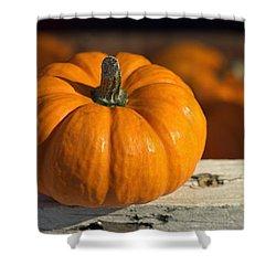 Little Pumpkin Shower Curtain by Joseph Skompski