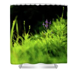 Shower Curtain featuring the photograph Little Purple Flower by Onyonet  Photo Studios