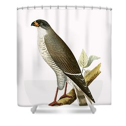 Little Red Billed Hawk Shower Curtain by English School