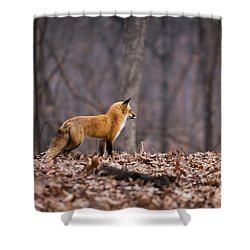 Little Red Fox Shower Curtain by Andrea Silies