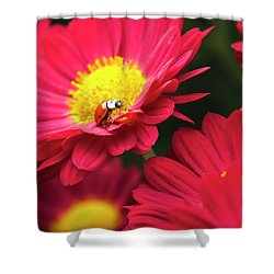 Little Red Ladybug Shower Curtain by Christina Rollo