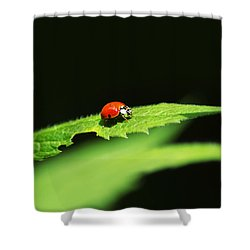 Little Red Ladybug On Green Leaf Shower Curtain