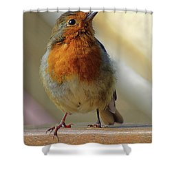 Little Robin Redbreast Shower Curtain
