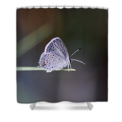 Little Teeny - Butterfly Shower Curtain