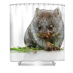 Little Wombat Shower Curtain