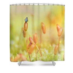 Little World Shower Curtain by Nikki McInnes
