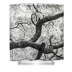 Live Oak Abstract 1 Shower Curtain