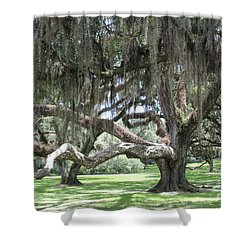 Live Oak Grove Shower Curtain