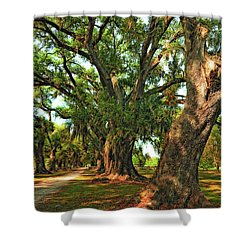 Live Oak Lane Shower Curtain by Steve Harrington
