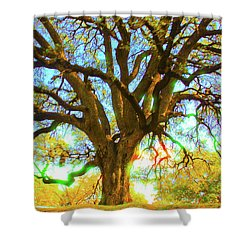 Live Oak Shower Curtain by Susan Crossman Buscho
