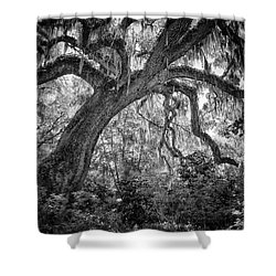 Live Oak Shower Curtain