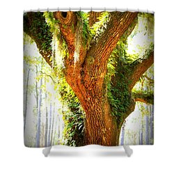 Live Oak With Cypress Beyond Shower Curtain by Carol Groenen