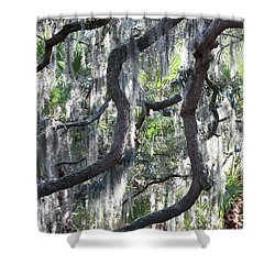 Live Oak With Spanish Moss And Palms Shower Curtain by Carol Groenen