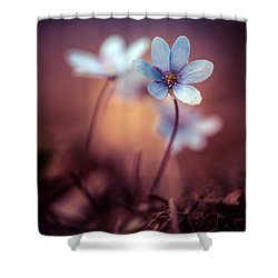 Liverworts Shower Curtain by Jaroslaw Blaminsky