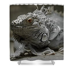 Liz Shower Curtain