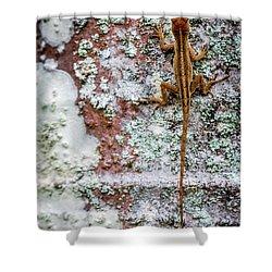 Lizard And Lichen On Brick Shower Curtain